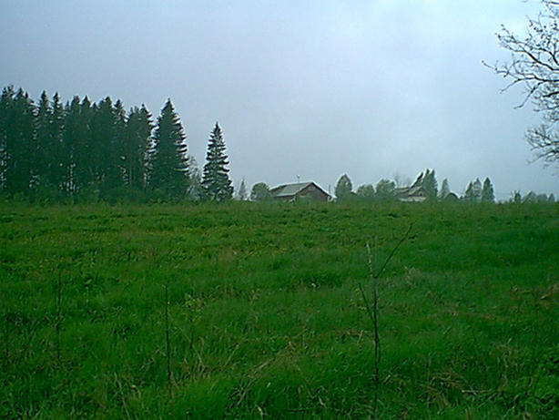 View to the west over old farm field (birch forest to-be).