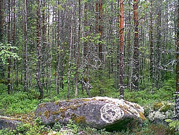 A rock near the spot with round-shaped moss growth on it, almost like marking the place.