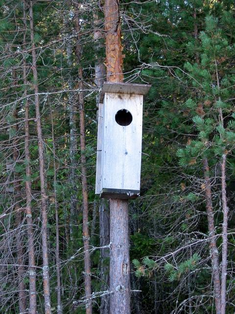 Bird house, the inhabitants have a stunning view to the lake.