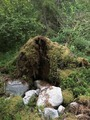#8: The fallen tree at the confluence point