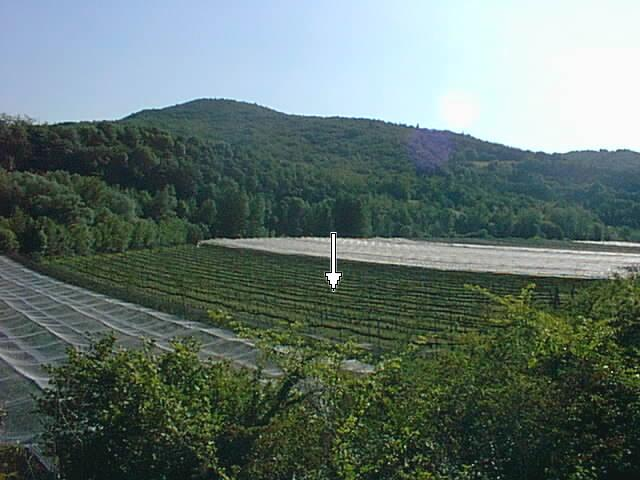 View of the orchard, with the confluence marked