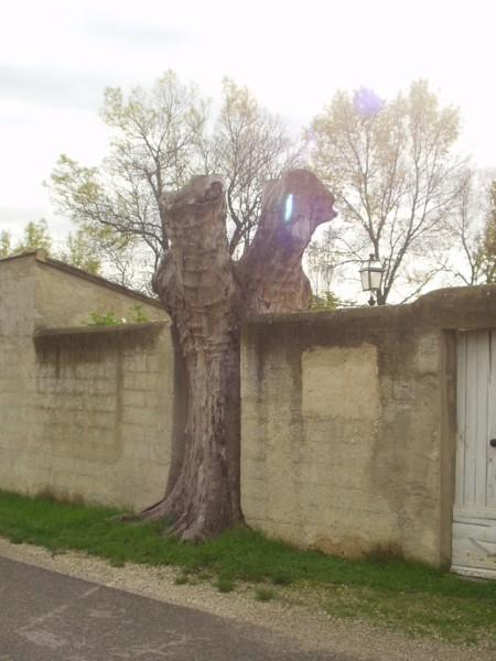 A tree in a wall, closed to the point