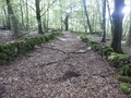 #10: Track with Moss Overgrown Walls