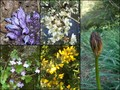 #10: Collection of flowers