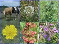 #9: Collection of plants and animals