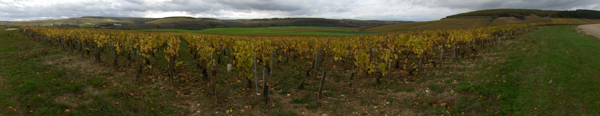 Vineyards at Chablis area not far from of CP