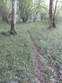 #9: Footpath that is used by Wild Pigs when they visit the confluence