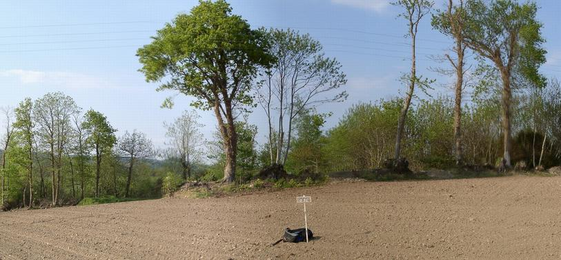 Confluence marked (temporarily) - view to NORTH – the tree