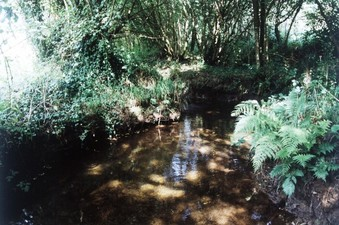 #1: The DCP, in the water, in the nettles at left or in the shrubs at right