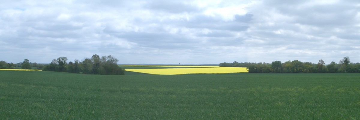 Panoramic image with coleseed field (enhanced)