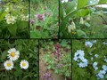 #9: Collection of local flowers