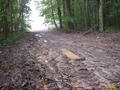 #4: The typical condition of the trails in the Forest of the Hautil!