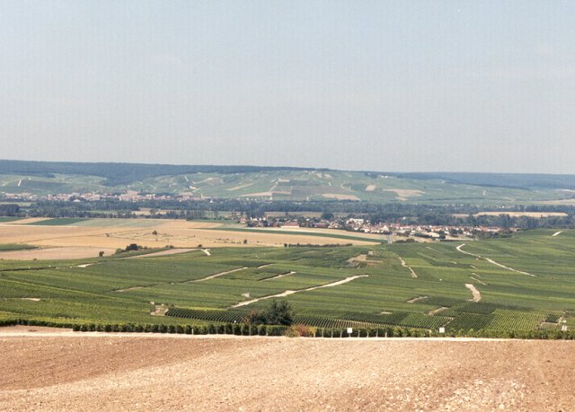 The view: vineyards, Chouilly, Epernay