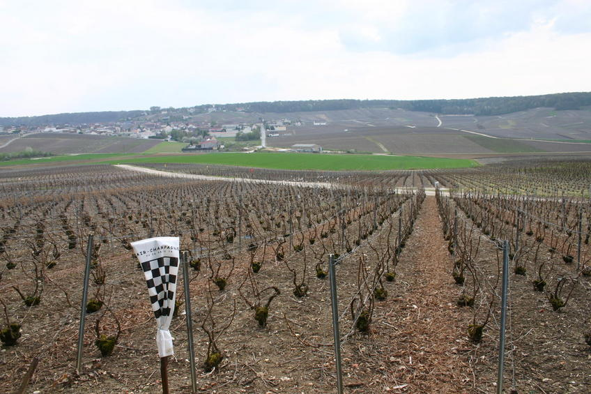Nearby Champagne field - a few hundred metres from the point