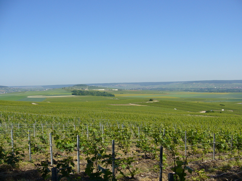 80 metres off the point you have this marvellous view towards the North West over vineyards