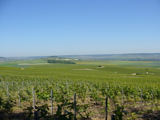 #1: 80 metres off the point you have this marvellous view towards the North West over vineyards
