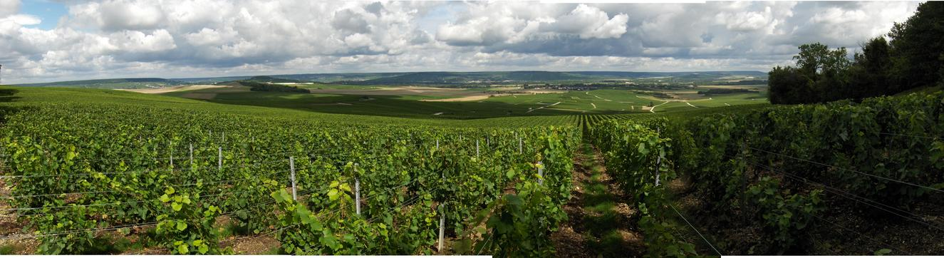PANORAMIC NW VIEW AT 72 MTS FROM CP. VINEYARDS FOR CHAMPAGNE