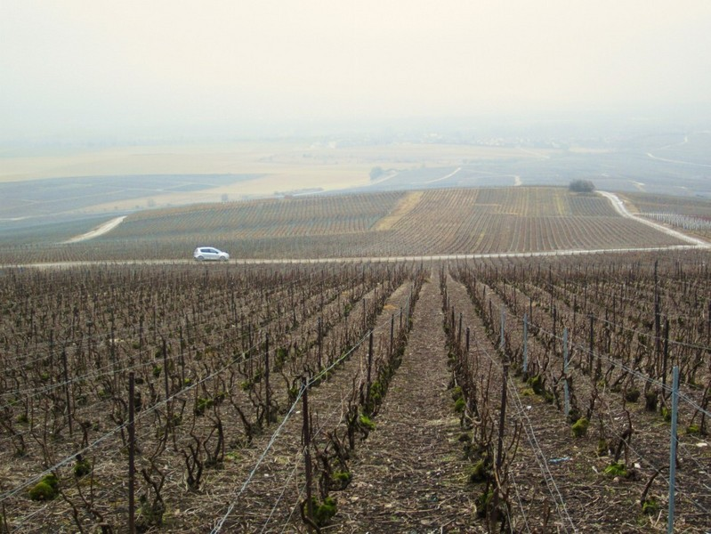 The vineyards of Champagne