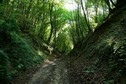 #9: The path climbing from Bayonville to the confluence