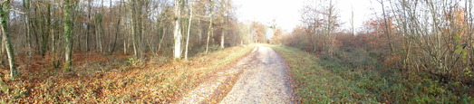 #1: NES panoramic view from the forest track