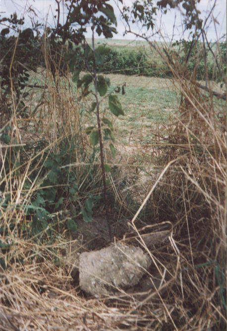 The tree planted on the Confluence point