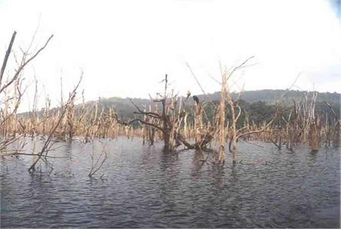 Dead trees overcoming the lake surface