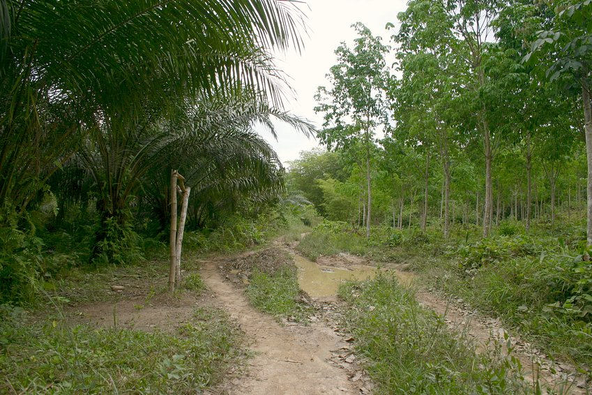 The water-logged track into the forest