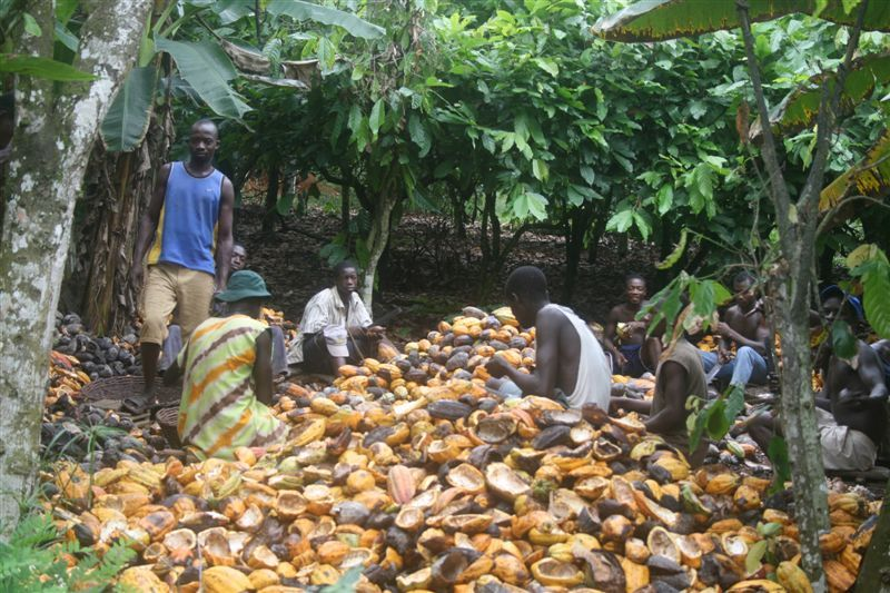 Locals shelling cocoa near the Confluence