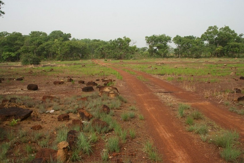 Track in a clearing with many termites colonies