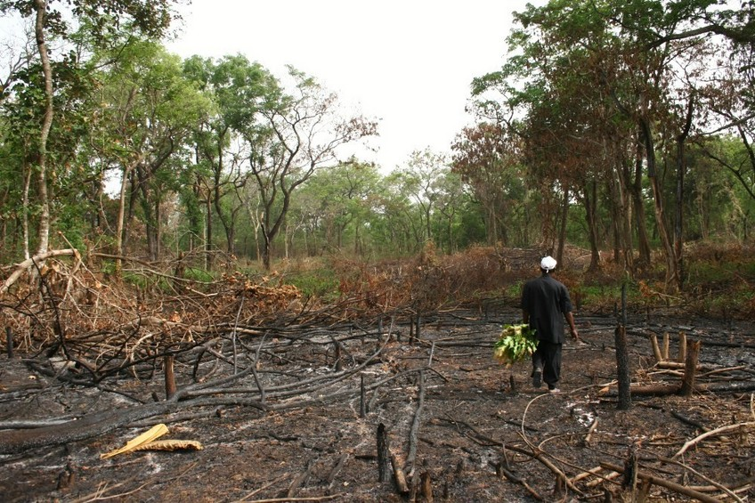 Burned forest to get space for agriculture