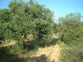 #5: View to the South, just olive trees.