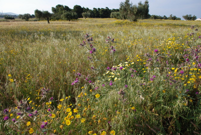 The wild flower field near the confluence area