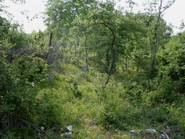 The terrain around is covered by partly very dense brushwood. On the left a fence of stacked branches can be seen.