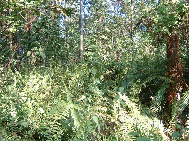 Jungle near the equator