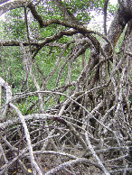 #8: 150m of mangroves and it gets worse