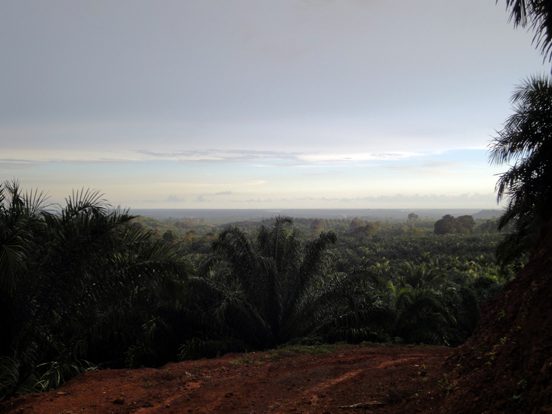 the view from the plantation towards the coast