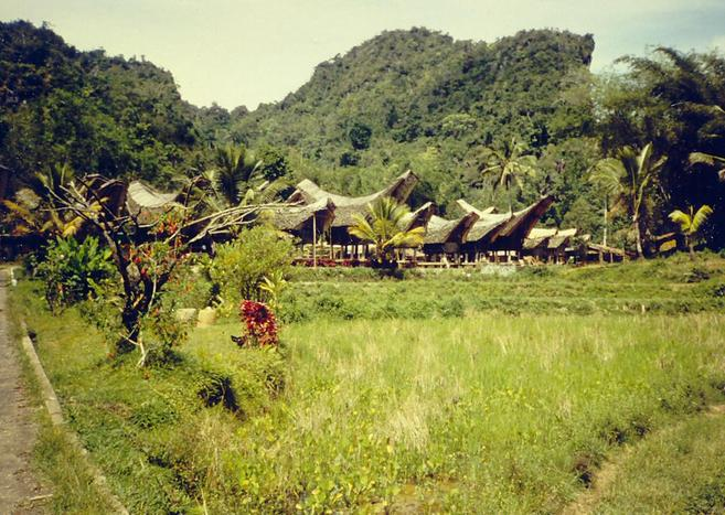 Village with typical Toraja houses