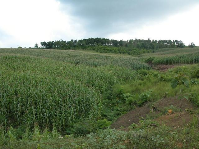 The confluence point is in the cornfield just to the left of the upper dirt area