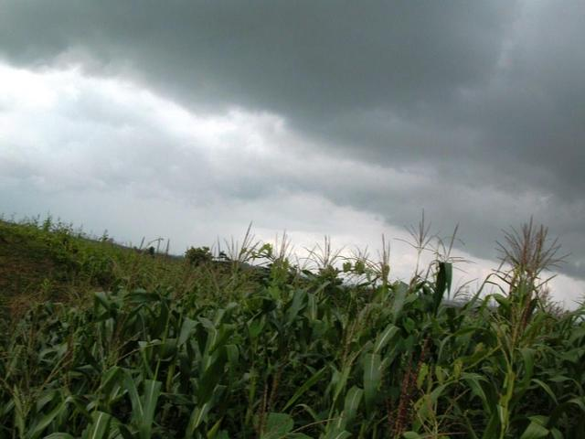 south (north and west are identical and show only corn stalks)