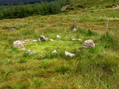 #7: The Knocknakilla Stone Circle, near the confluence point