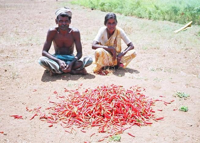 Raasi & his wife with their harvest