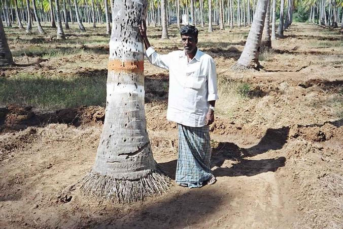 Nanjunda Naik - Caretaker of the coconut plantation