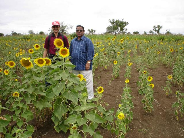 Lakshman and Anand in a sunflower farm near 16N76E