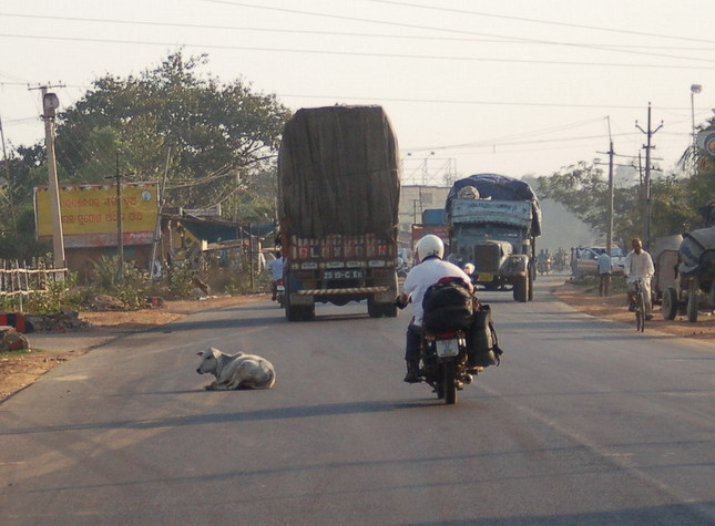 Home from the point - cows, buses, trucks and cars all have priority over motorbikes