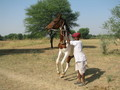#5: Veejay's father and his dancing horse.