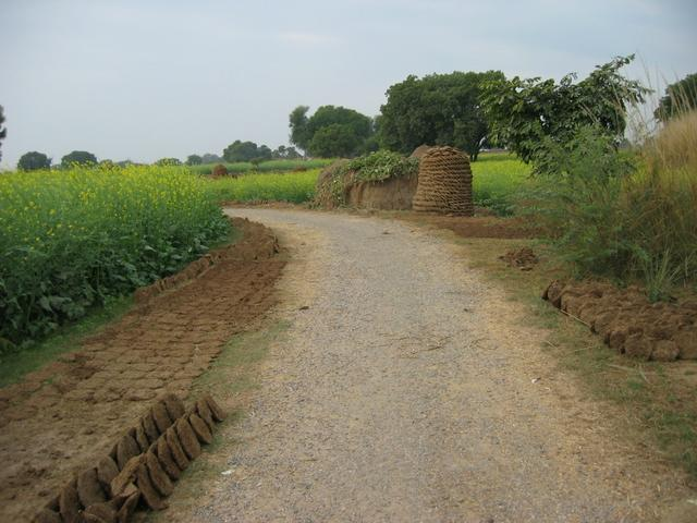 The road between the confluence and the village of Shamuchetra