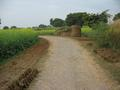 #3: The road between the confluence and the village of Shamuchetra