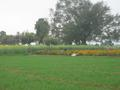 #7: Marigold fields near the confluence