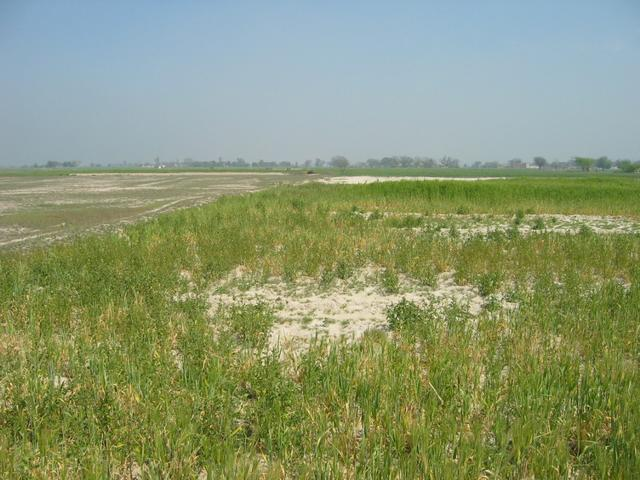 28n78e -- The edge of a wheat field and dried out mud flat.