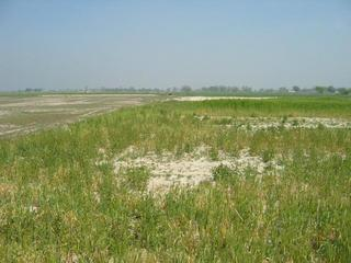 #1: 28n78e -- The edge of a wheat field and dried out mud flat.